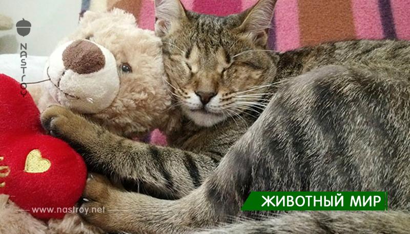 Никто не хотел забирать этих трёх слепых кошек, пока одна женщина не решила взять их себе домой!