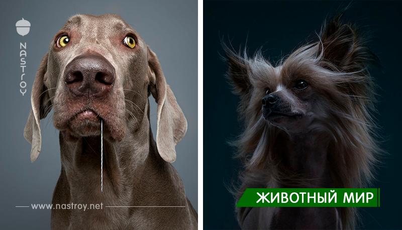 Портреты собак разных пород, они бесподобный!