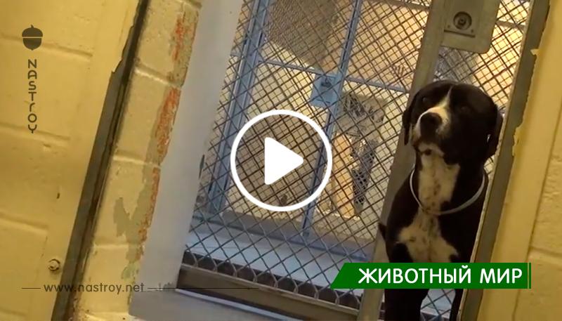 Пёс из приюта не смог сдержать эмоций, когда понял, что его пришли забрать, а не усыпить!