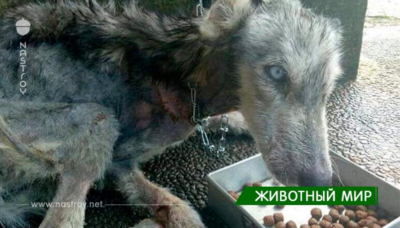 Невероятное преображение бездомной собаки!