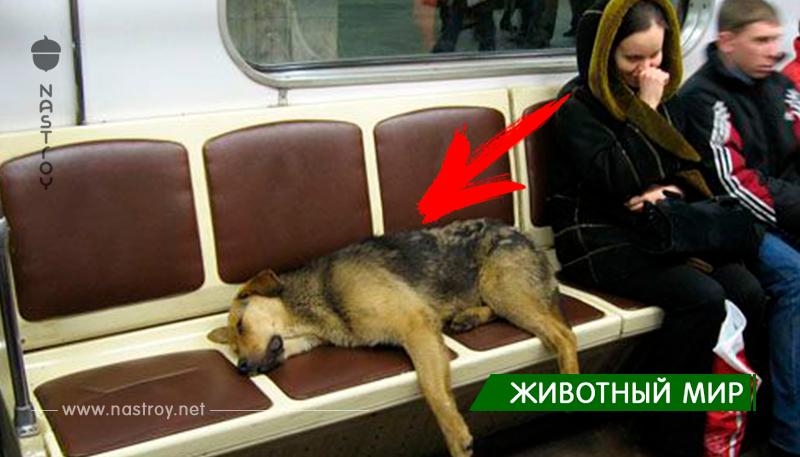 В Вагон метро забежала собака!