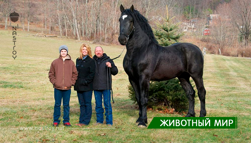Самые красивые породы лошадей! Фантастика!