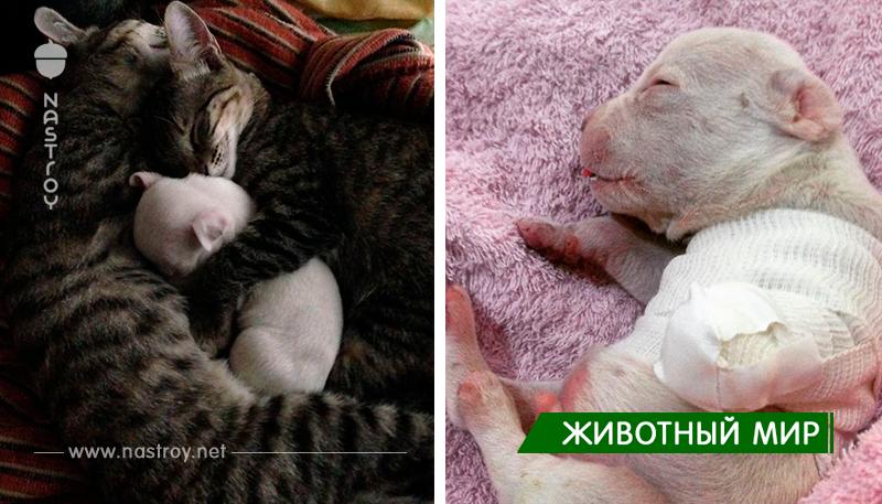 Кошки воспитывают трёхногого щенка, которого пыталась съесть его мать!