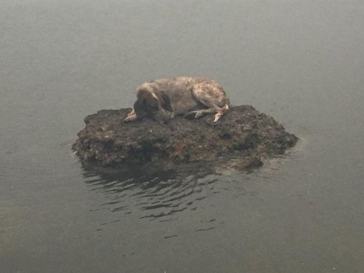 Символ трагедии в Греции, Собака которая чудом спаслась от пожаров!
