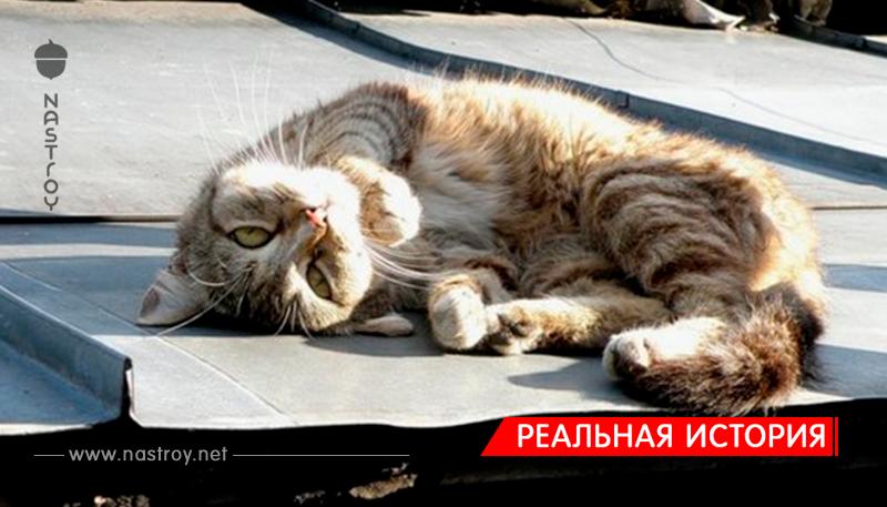 На крыше лежал кот, а над ним хищно кружила стая ворон!