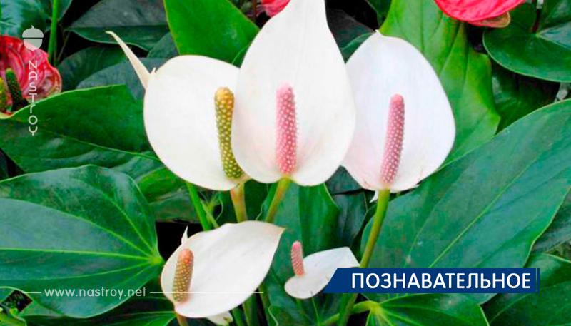 Только для женщин! Этот цветок привлекает удачу и достаток в ваш дом!
