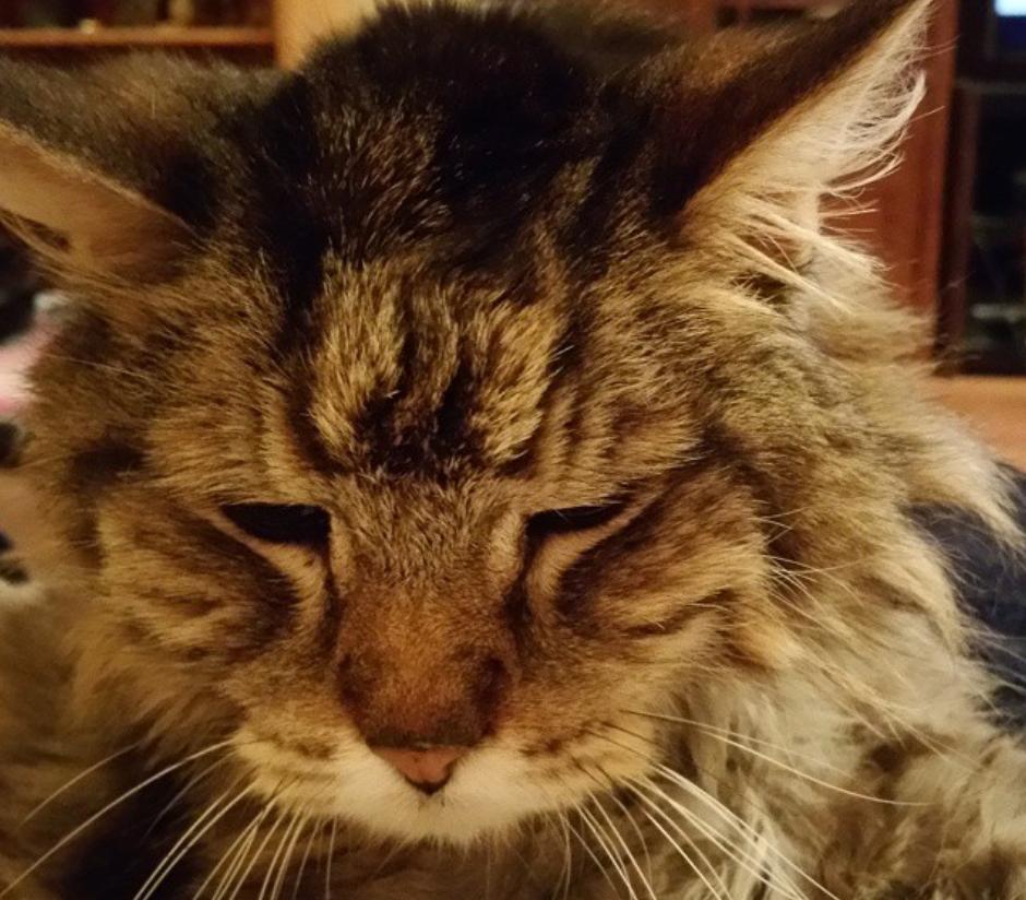 21 странная штука, которую тайно делают все, у кого есть кот