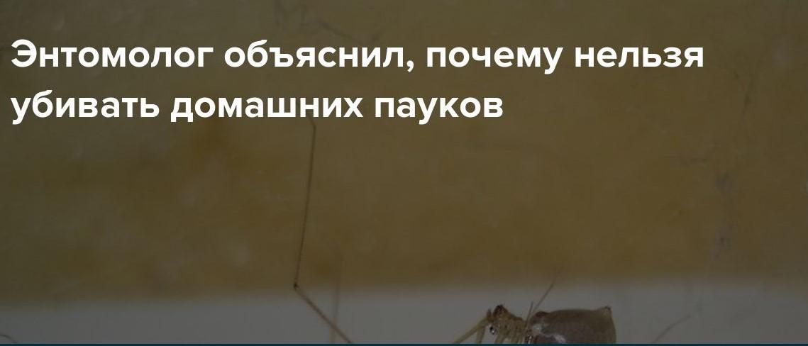 Почему нельзя убивать домашних пауков?!