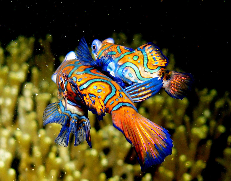 10 самых красивых животных на планете - некоторые скоро из них исчезнут