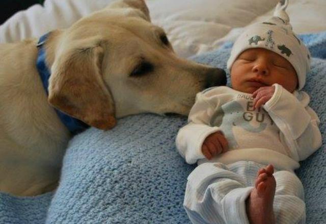 Злая собака побежала к младенцу, родители зайдя в комнату, потеряли дар речи