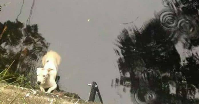 Когда полицейские пытались вытащить пса из реки, они вдруг поняли — под водой есть кто-то еще