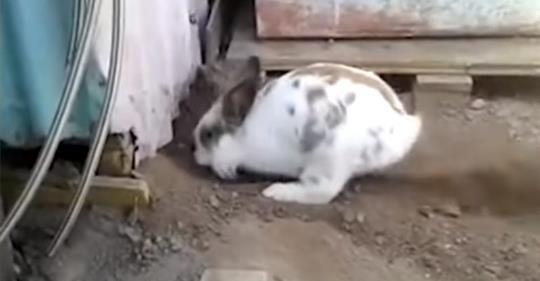 Хозяин заметил, что кролик роет ямку. Оказалось, что он спасал маленькую жизнь