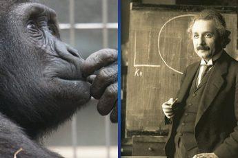 Гениальный тест на интеллект: 3 простейших вопроса, на которые вы точно не сможете правильно ответить