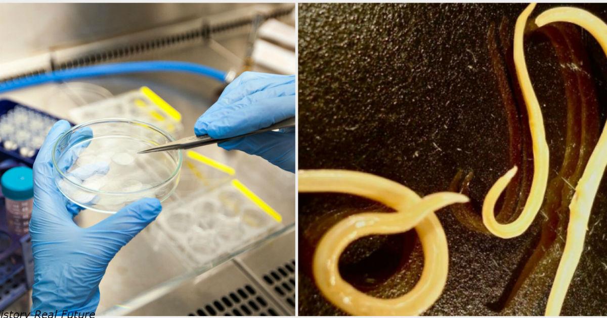 Страшные сибирские черви, погребенные в вечной мерзлоте на 42 000 лет, возвращаются к жизни