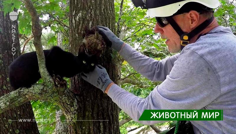 Кот пенсионера застрял на дереве, помочь было некому. Тогда хозяин сам занялся альпинизмом, и вот уже 4 года спасает котиков!