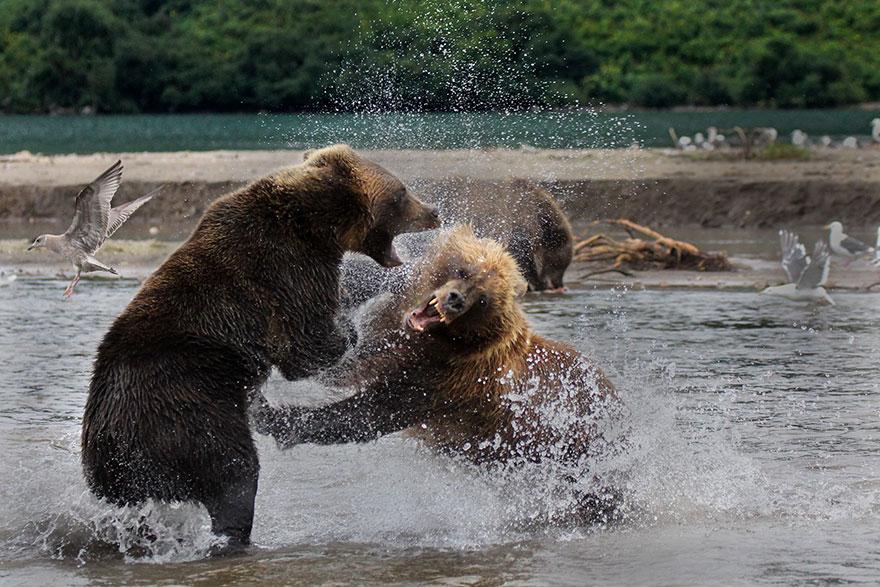 Siena International Photo Awards-2018: Самые яркие снимки животных