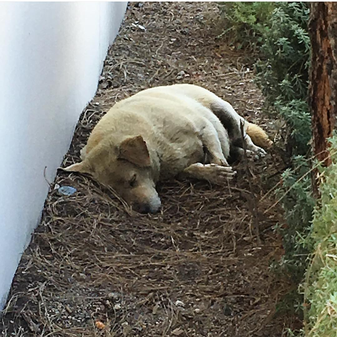 Собака валялась в грязи: семья ушла и бросила ее. Вот что было потом