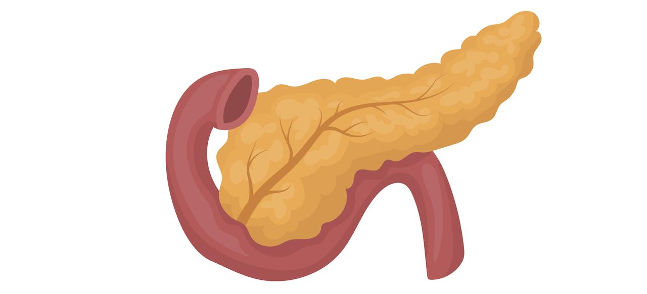 Поджелудочная - жизненно важный орган, но симптомы её болезни 90% из нас игнорируют