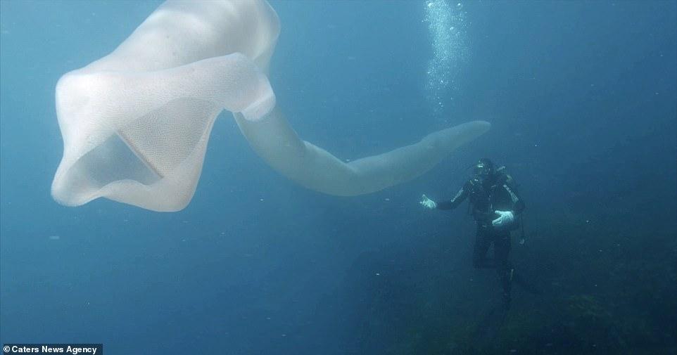 Дайверы нашли под  водой странных  гигантских ″морских червей″. Вот что это такое