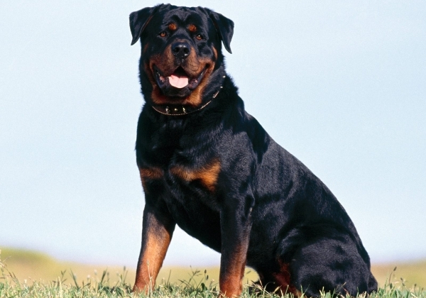 11 самых страшных пород собак, которые существуют на планете