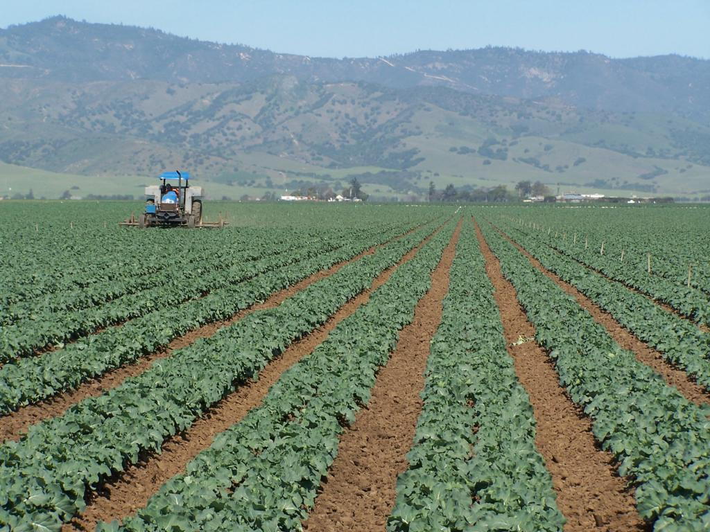 Земли сельхозназначения: категории и виды использования