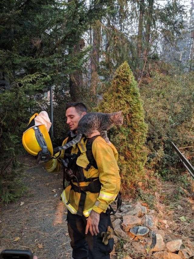Пожарные спасли кота от пожара. Теперь тот от них - ни на шаг!