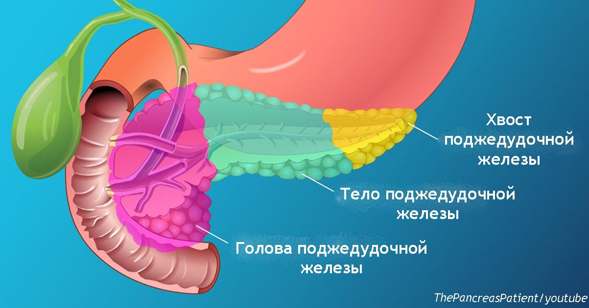 Поджелудочная   жизненно важный орган, но симптомы её болезни 90% из нас игнорируют