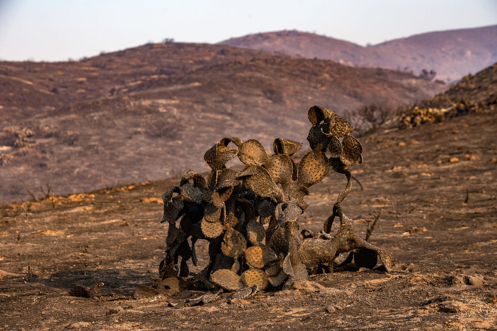 29 фото о том, во что превратилась Калифорния после адских пожаров