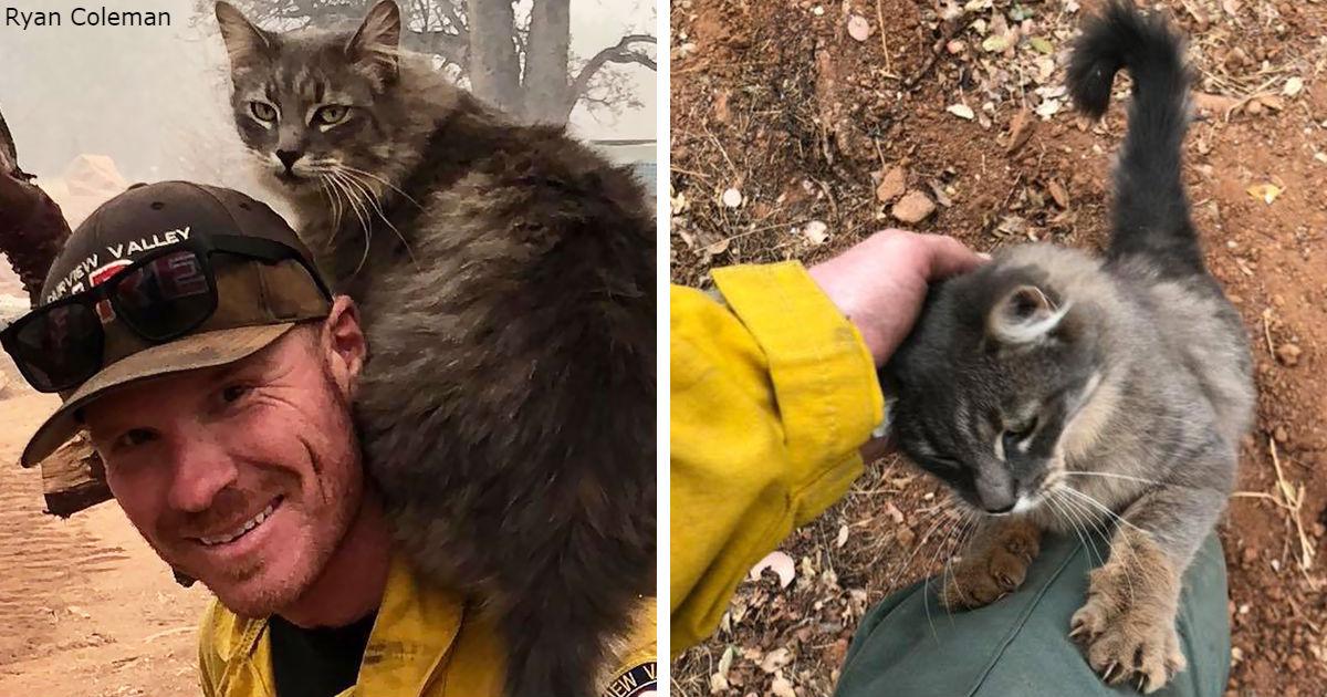 Пожарный спас кошку от лесного пожара в Калифорнии - и теперь она от него ни на шаг!