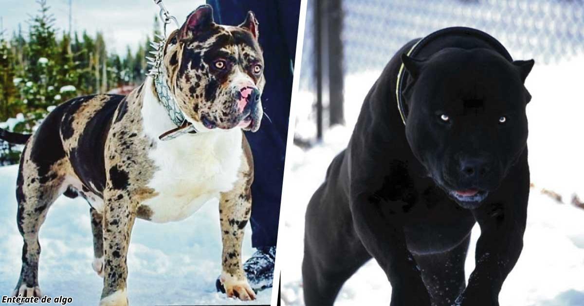 Страшная порода собак