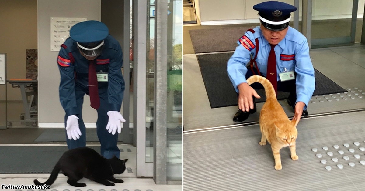 2 кота в Японии уже 2 года пытаются зайти в музей, но им мешает охранник. За «войной» следят тысячи людей