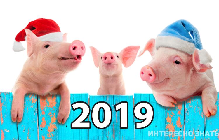 Новый год Желтой Земляной Свиньи 2019: Как встречать и что надеть?
