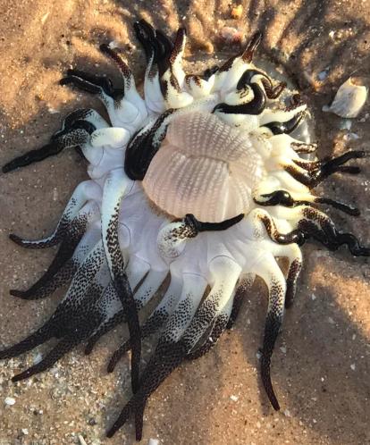 Странное существо, похожее на пришельца, выбросило на берег Австралии