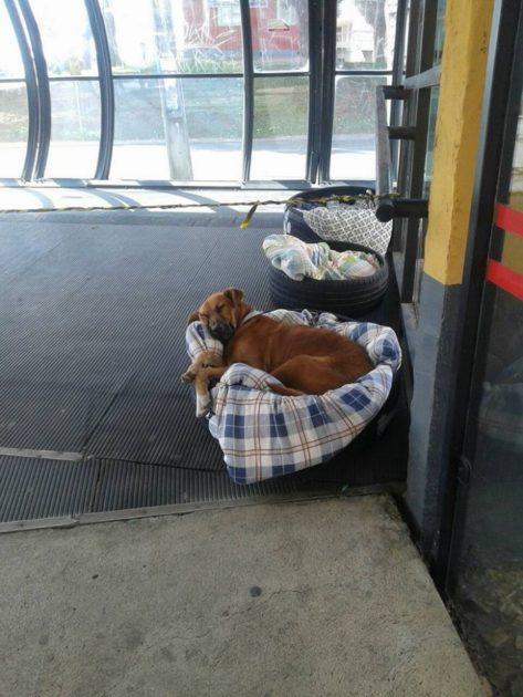 Автовокзал открыл двери для бездомных животных - и сделал им ″кровати″