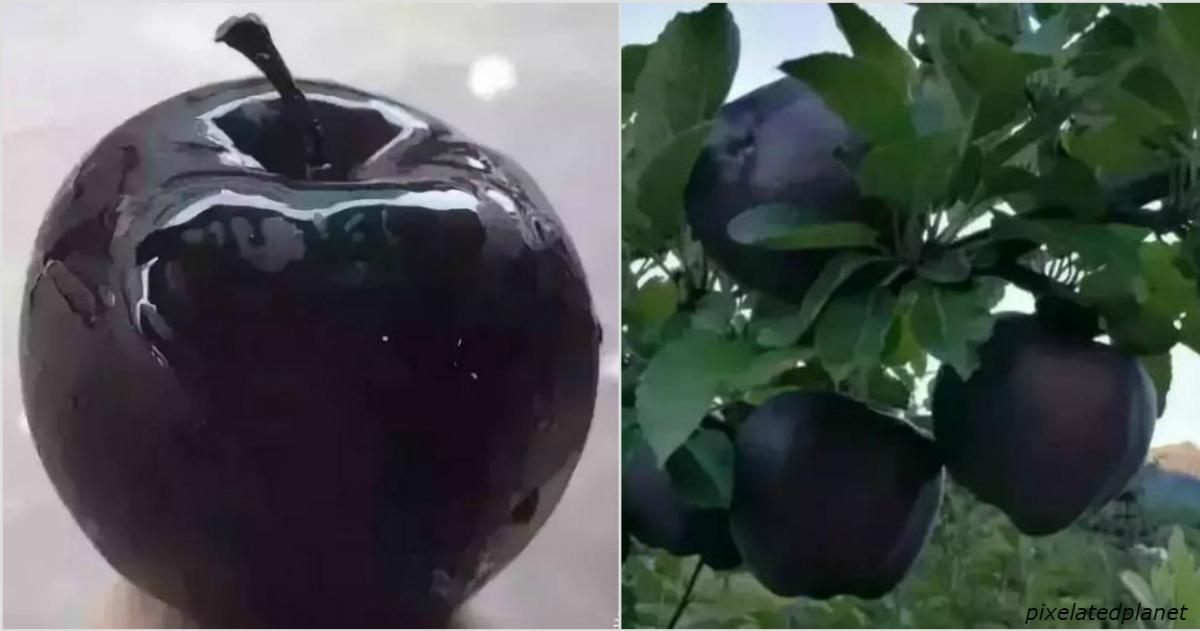 Черные алмазные яблоки продаются по  за штуку, но никто не хочет их выращивать
