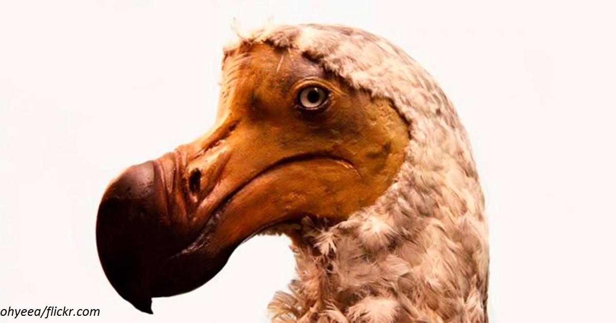 7 видов животных, которые исчезли из-за  алчности человека