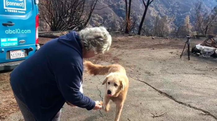 Пес, переживший пожар, охранял дом еще месяц после того, как сбежали хозяева