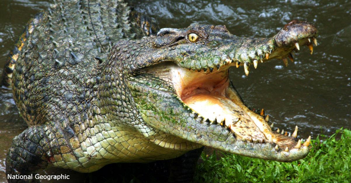 Chanel – первый люксовый бренд, который запретил вещи из крокодила и змей