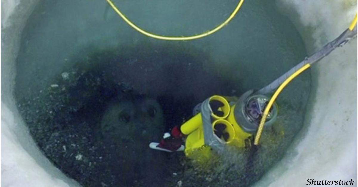 Появилось первое видео того, что происходит подо льдами Антарктиды