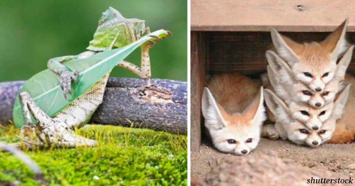 20 милых фото животных, которые сделаны чертовски вовремя