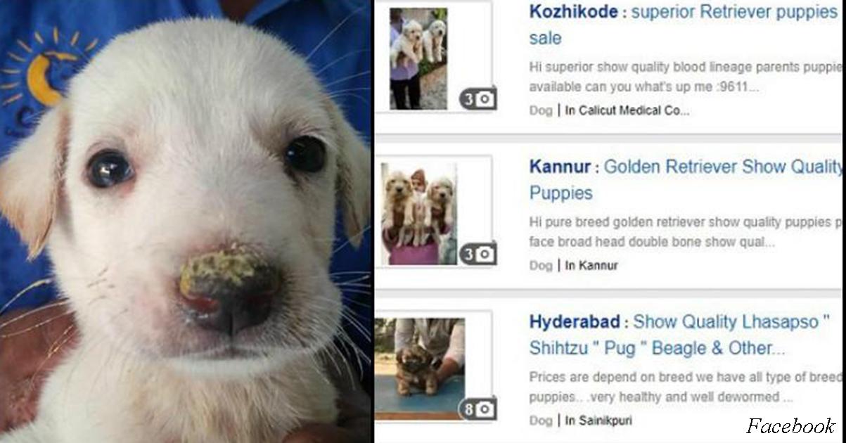В Фейсбуке больше нельзя продавать щенков или вещи из кожи и меха