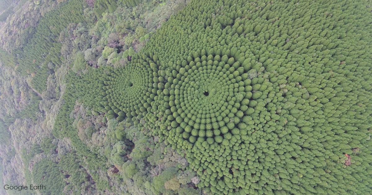Конец 50-летнего эксперимента: В Японии появились ″круги на полях″