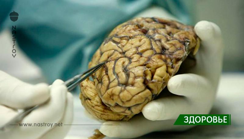Чилийские ученые нашли способ остановить слабоумие!