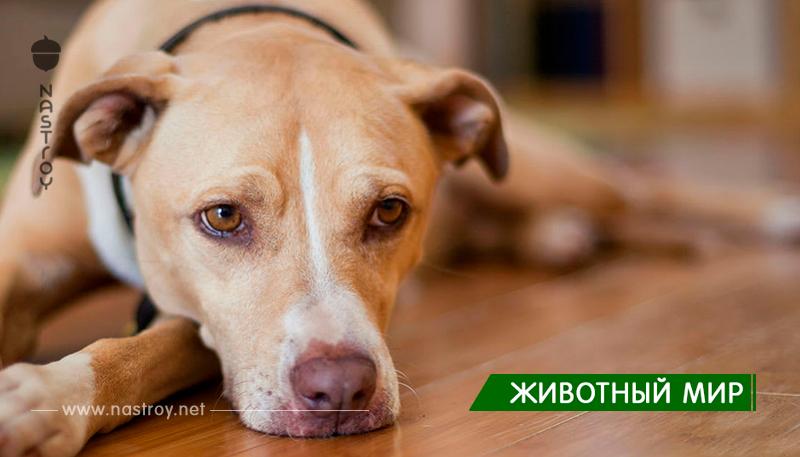 В Германии приюты для животных запретили брать животных на Рождество