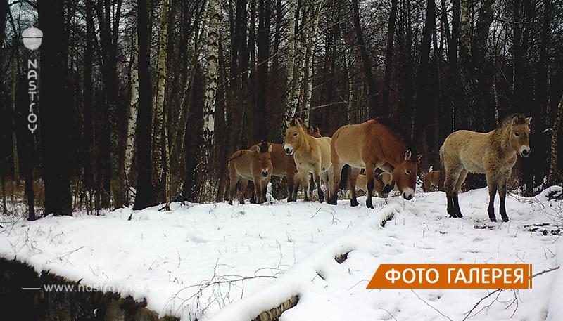 30 фото из лесов Чернобыля, где происходит  что-то странное и необычное