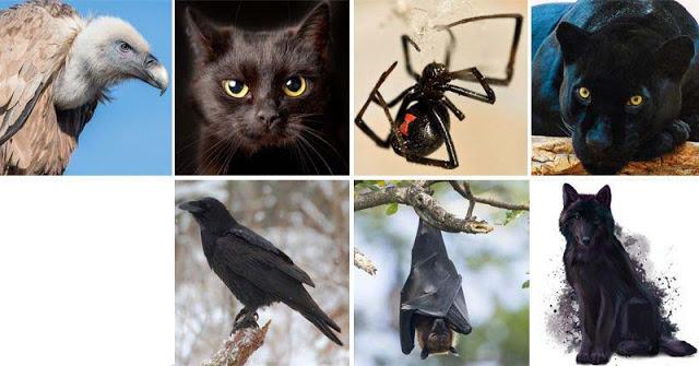Выберите животное, чтобы узнать скрытую темную сторону Вашей личности