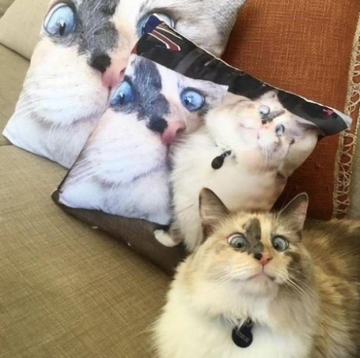 47 раз, когда коты доказали: этот мир создан специально для них