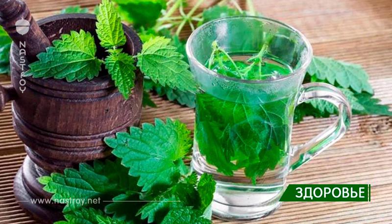 Мощные свойства этого растения быстро избавят от проблем с кровообращением, задержки жидкости и диабета!