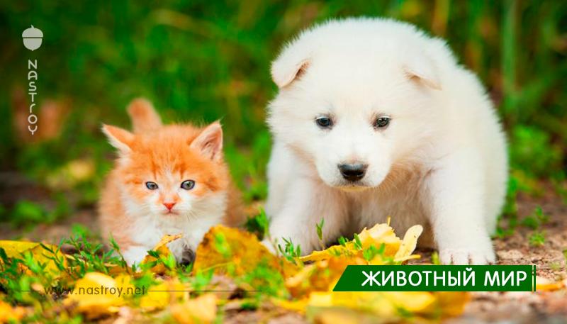 Великобритания запретила продавать в зоомагазинах щенков и котят младше 6 месяцев