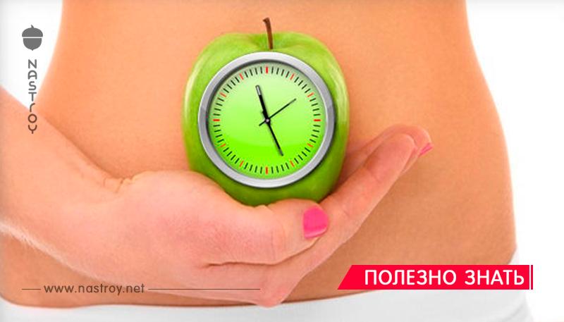 Сколько времени перевариваются в желудке все продукты, которые вы едите